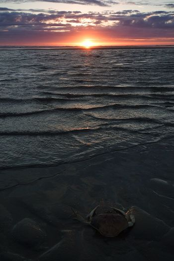Sea Sky Sunset Crab Beach The Week On EyeEm