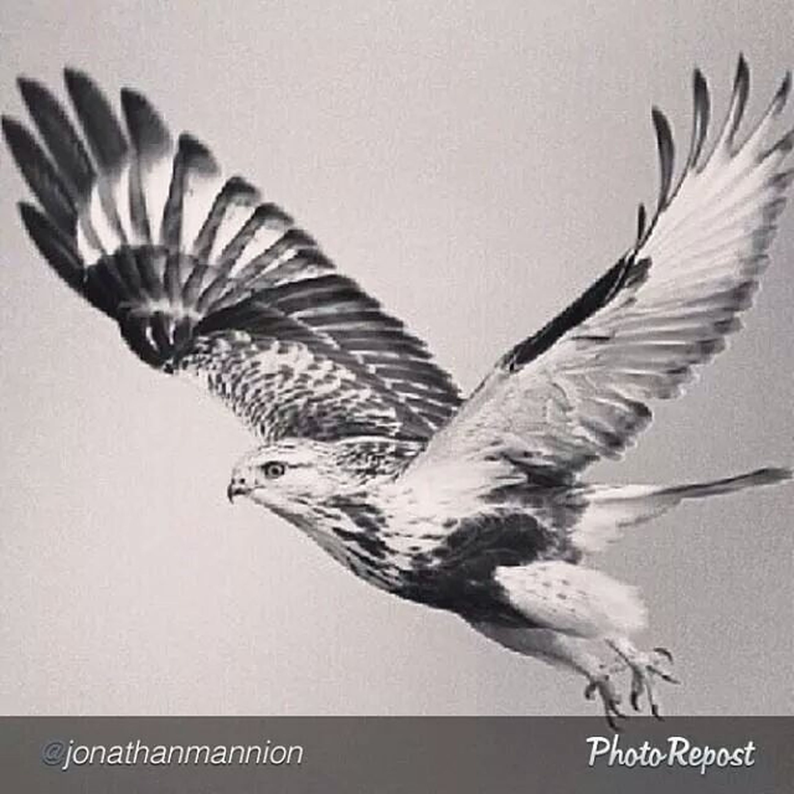 bird, animal themes, close-up, studio shot, animals in the wild, no people, feather, copy space, wildlife, art and craft, indoors, white background, nature, one animal, clear sky, focus on foreground, dry, day, creativity, art
