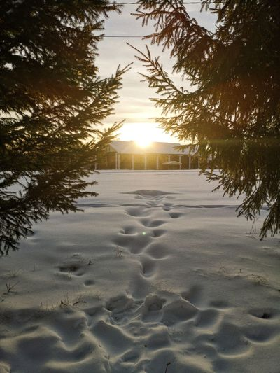 Scenic view of snow covered land during sunset