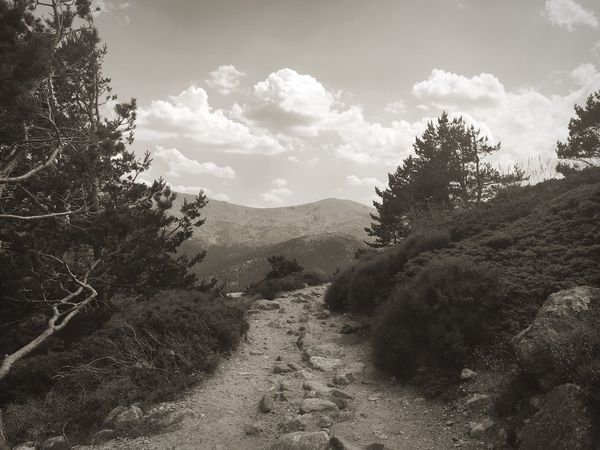 TheRoad Path Mountains Nature Trees Outdoors SPAIN Segovia Cotos On The Way