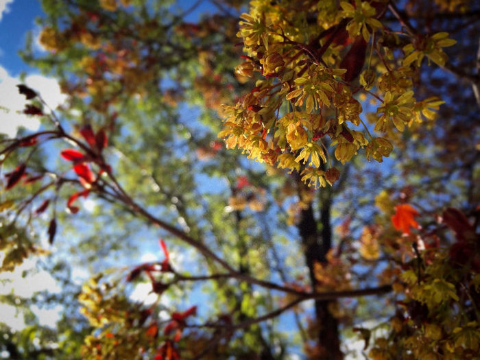 Waning Beauty In Nature Branch Branches Day Focus On Foreground Green Color Growth Leaf Leaves Multi Colored Nature Non-urban Scene Outdoors Scenics Tranquility Tree
