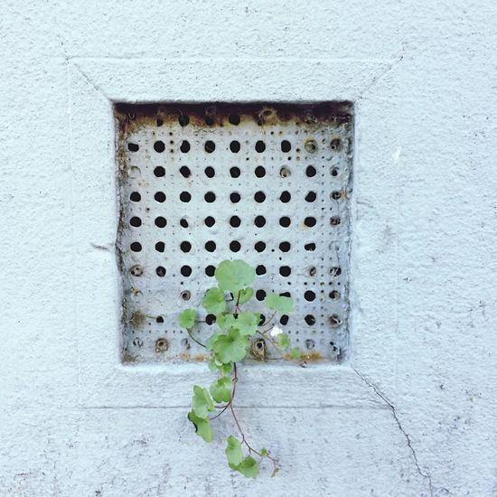 No People Architecture Day Metal Grate Close-up Outdoors Building Exterior Textures And Surfaces Architectural Detail Getting Creative Getting Inspired Wall - Building Feature Plant