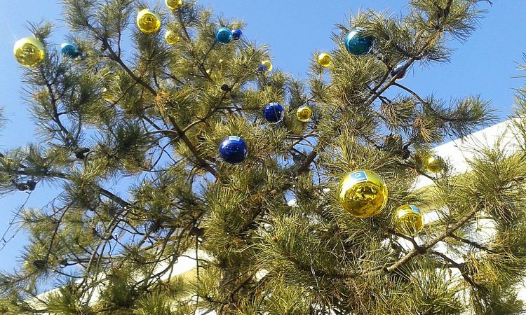 Low Angle View No People Nature Beauty In Nature Close-up Sky Outdoors Day Blue Christmas Tree Christmas Holidays Christmas Decorations