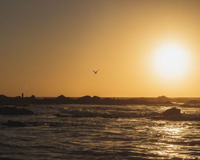 Playa Hermosa II Pichilemu Playahermosa Chile Goldenhour Danicoph EyeEm Selects Sunset Sea Bird Flying Silhouette Sun Nature Beauty In Nature Beach Sunlight Sky