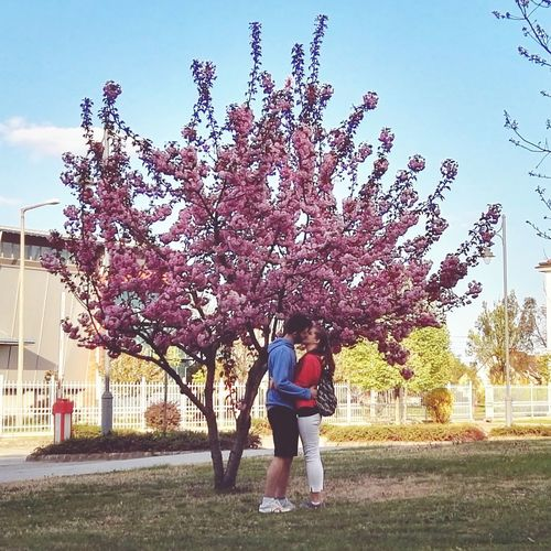Grass Outdoors Spring Fresh Couple Couplegoals Relationship Relationshipgoals Kiss Pinktree Flower Tree Pink Flor Kissunderthetree Boyandgirl Forever Togetherforever Unilife Student Life