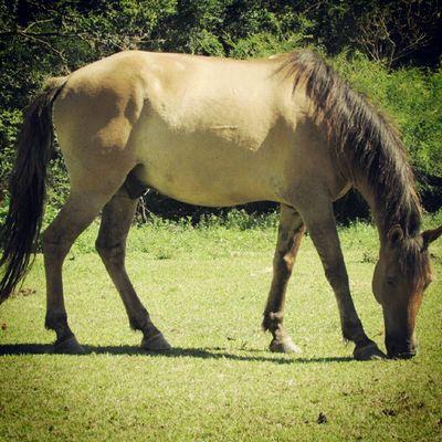 Instagallerys Instagalleries Instagram Horse igerscampinas
