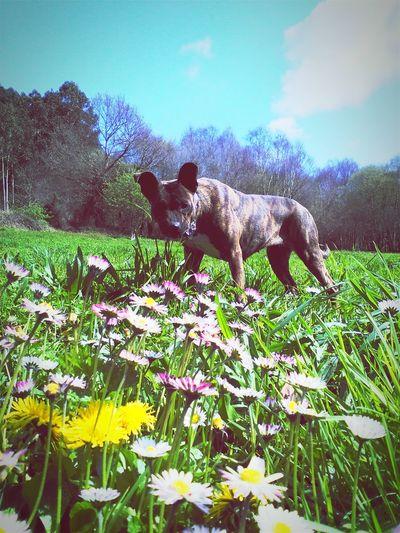 Llegó la primavera!!!! Relaxing