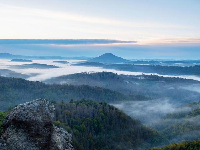 Dark green mountain forest landscape. foggy mountain forest in valley. mountain forest in clouds