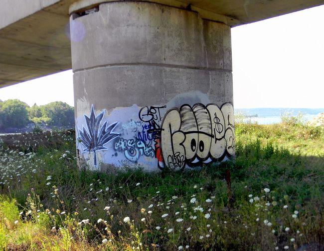 Graffiti Plant