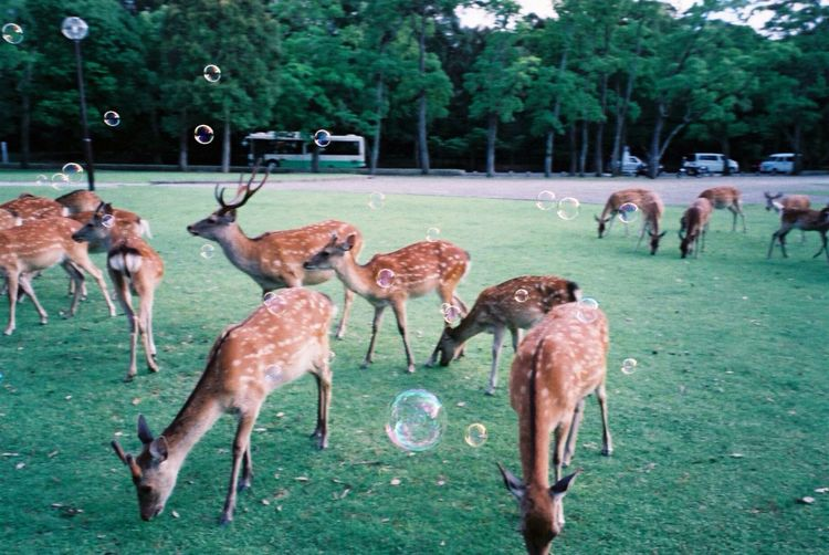 Herd of spotted deer with bubbles in the meadow