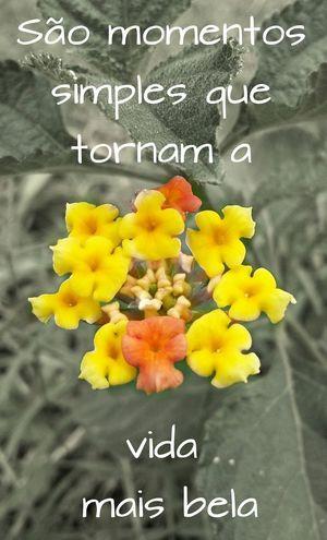 Yellow Flower Text Emocao Love Fragility Pensamentos Fluem PENSAMENTOS  Love♡