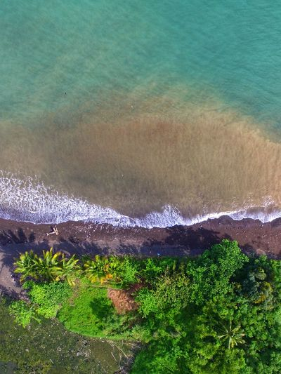 trees, beach, and sea Verticalscape Vertical Composition Vertical Panorama Landscape Dji Djiphantomindonesia DJI Phantom 3 Professional Phantom 3 Drones Aerial View Aerial Shot Aerial Photography Water Beach Nature Sea Outdoors Beauty In Nature Day