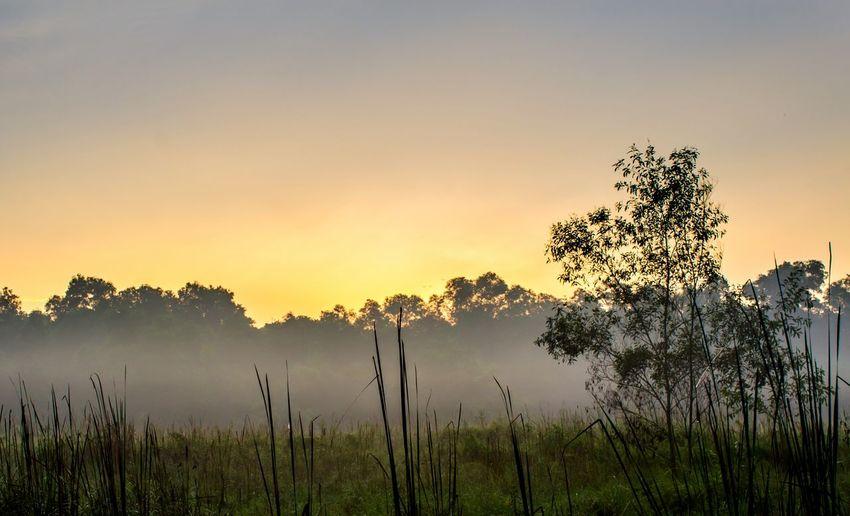 A mist. Malaysia EyeEmNewHere Nature Backgrounds Klang Portklang Sunrise Morning Light Landscape Sky Tree Dawn Sunset Fog Beauty Lake Water Morning Sunlight Calm Shining
