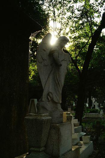 Luz y sombra Cementerio Sombras Shadow Angels Little Angels Mexico City Cementerio Tree Night Outdoors Shadow Representing