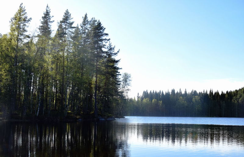 Finnish landscapes. Finland Beauty In Nature Clear Sky Coniferous Tree Day Finnish Landscape Forest Growth Idyllic Lake Lake View Land Landscape Nature No People Non-urban Scene Reflection Reflection Lake Scenics - Nature Sky Tranquil Scene Tranquility Tree Water