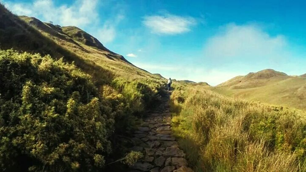 The road less travelled. Taken during my first Mt. Pulag climb. Mt. Pulag Mountains Nature Philippines Outdoors Adventure The Adventure Handbook
