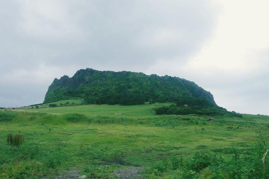 Nature Mountains JEJU ISLAND  Jeju Green