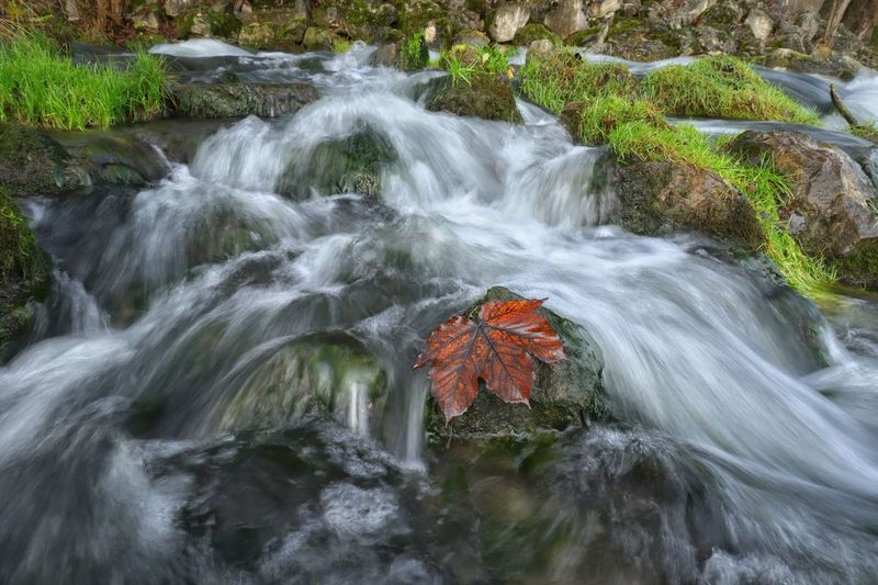 Mystic creek Blatt Leaf Langzeitbelichtung Waterfall Wasserfall Wasser Landscape Michael Hruschka Https://www.facebook.com/mh.photography.de/ Water Beauty In Nature Plant Scenics - Nature Motion Waterfall Nature Long Exposure No People Flowing Water High Angle View