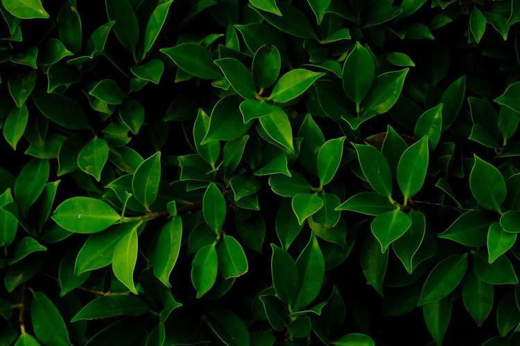 Full frame shot of leaves on field