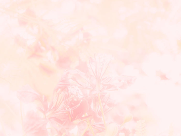 Backgrounds Pink Color Plant Beauty In Nature Pastel Colored Flower No People Nature Freshness Full Frame Flowering Plant Abstract Close-up Abstract Backgrounds Tranquility Fragility Pattern Selective Focus Springtime Textured  Softness Outdoors Soft Focus