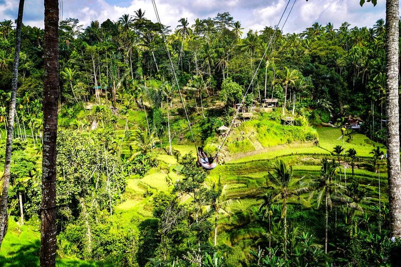 Swing Vacations Holiday Baliphotography Bali Plant Tree Growth Green Color Beauty In Nature Nature No People Day Tranquility Outdoors Foliage Lush Foliage Scenics - Nature Land Sunlight Full Frame Tranquil Scene Backgrounds Non-urban Scene Landscape