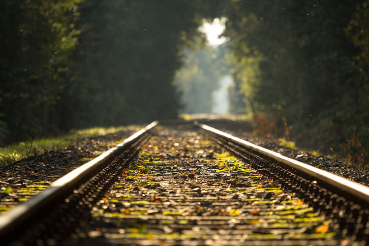 Railroad tracks on field amidst trees