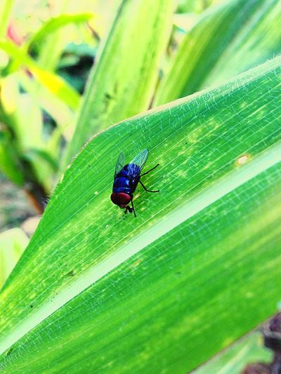 Fly. Mosca Fly Live Colors #color #colorful #TagsForLikes #red #orange #yellow #green #blue #indigo #violet #beautiful #rainbow #rainbowcolors #col
