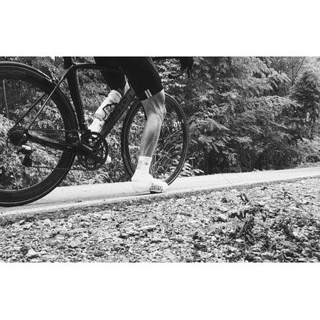 Ready Campagnolo Castellicycling Miche Bianchi Defeet Strava Vittoriatyres Biancoenero Vscocam Xperiaz Bw Bnw Blackandwhite Ciclismo Bikeporn Cycling Roadbike Pedalare Fatica Sudore Bestphoto Bestoftheday