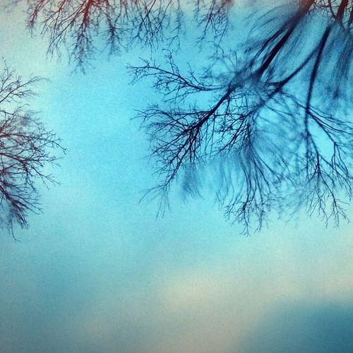 Rain and Rainy Days Blue Sky and Trees Tadaa Community