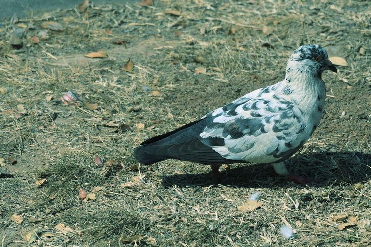 Bird High Angle