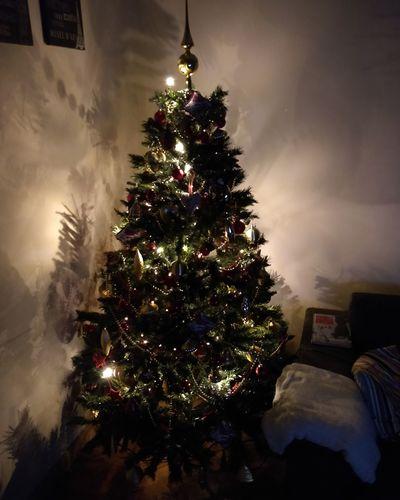 Job done! 🎄🎄🎄 Alberodinatale Natale  Natale 2017 Christmas Christmas Tree Celebration Tree Christmas Decoration Tradition Celebration Event Christmas Lights No People Indoors