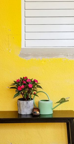 Potted plant with watering can on table by yellow wall