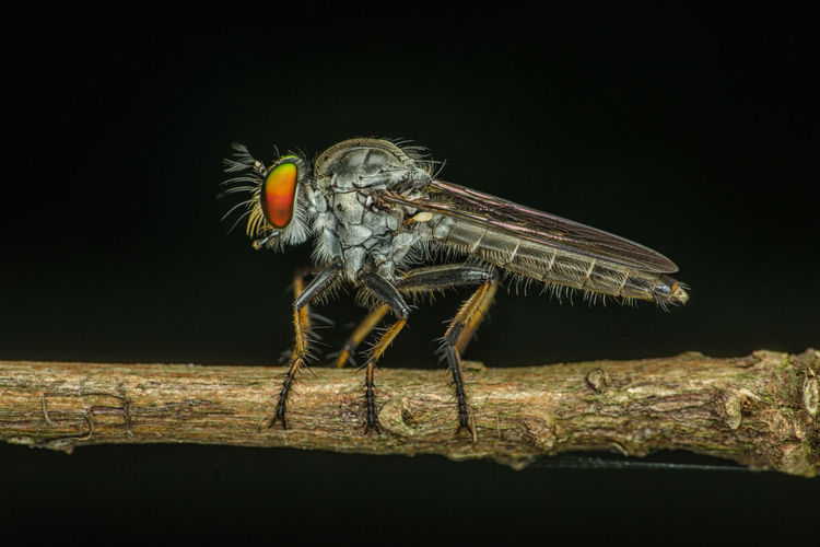 Close-up of insect on branch against black background
