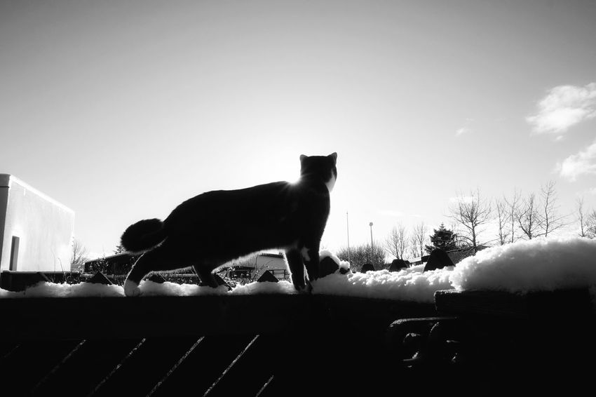 Blackandwhite Photography Black And White My Cat! Enjoying Life Cats Of EyeEm Beautiful Day