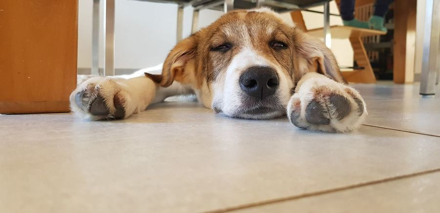 Unser kleiner Racker Marsi No People Indoors  Indoor Photography Pets Dog Domestic Room Hygiene Sitting Portrait Close-up