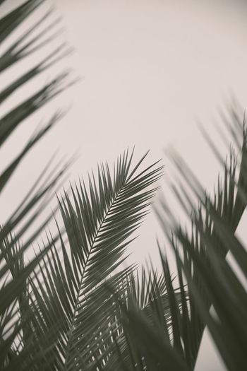 Looking up to fern and palm leaves using blurred depth of field with copy space Palm Tree Tropical Natural Beauty In Nature Neutral Colors depth of field Blur Frond Growth Earthy Copy Space Leaves Fern Neutral Palm Tree Growth Tree Tropical Climate Palm Leaf Plant Leaf Nature Plant Part Low Angle View Sky Outdoors Beauty In Nature