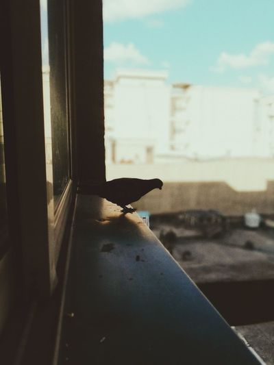 View of bird perching on wall