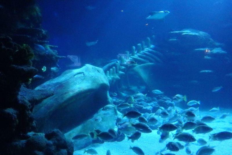 Water Sea Underwater Swimming UnderSea Fish Animals In The Wild Sea Life