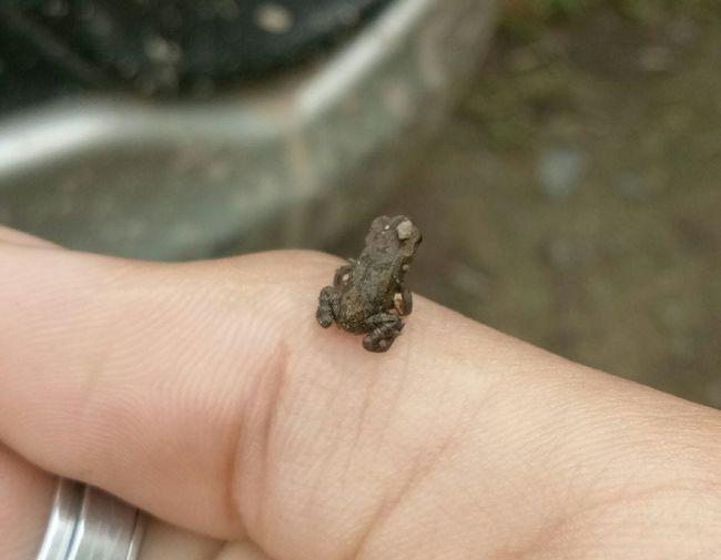 Frog Human Hand