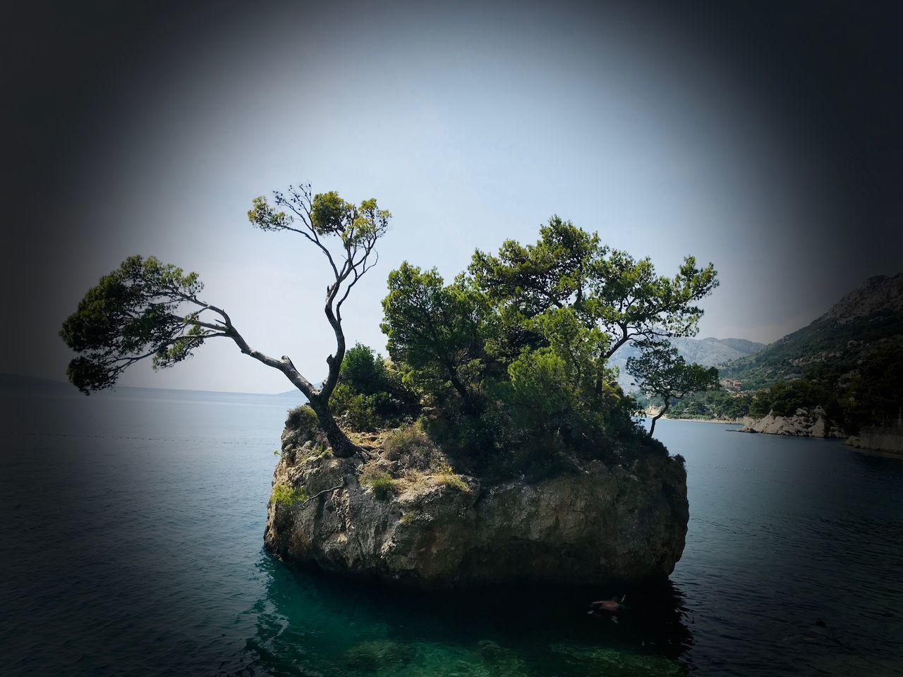 plant, tree, water, beauty in nature, rock, rock - object, tranquility, solid, nature, tranquil scene, no people, scenics - nature, sky, day, growth, outdoors, sea, land, idyllic