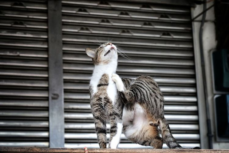 Cat Cat Photography Animal Themes One Animal Animal Wildlife No People Day Perching City Landscape EyeEmNewHere Light And Shadows Streetphotography Cityscape Landscape Urban Landscape Travel Nature Outdoors Cute City Streets  Beauty In Nature Face EyeEm Best Shots - The Streets