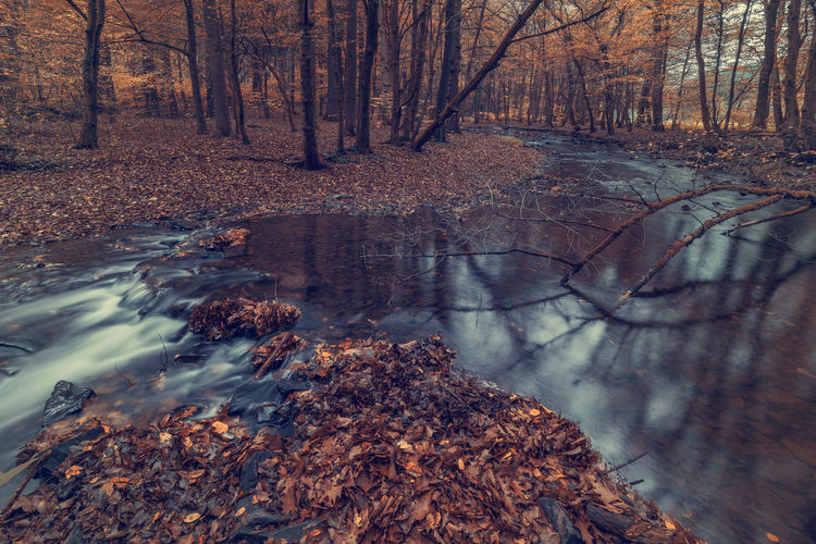 River in the forest in autumn. Art Backgrounds Tree Forest Land Water Nature Plant Tranquility Tree Trunk Trunk Day No People Beauty In Nature Autumn Tranquil Scene WoodLand Bare Tree Non-urban Scene Scenics - Nature Plant Part Change Outdoors Stream - Flowing Water Flowing Water