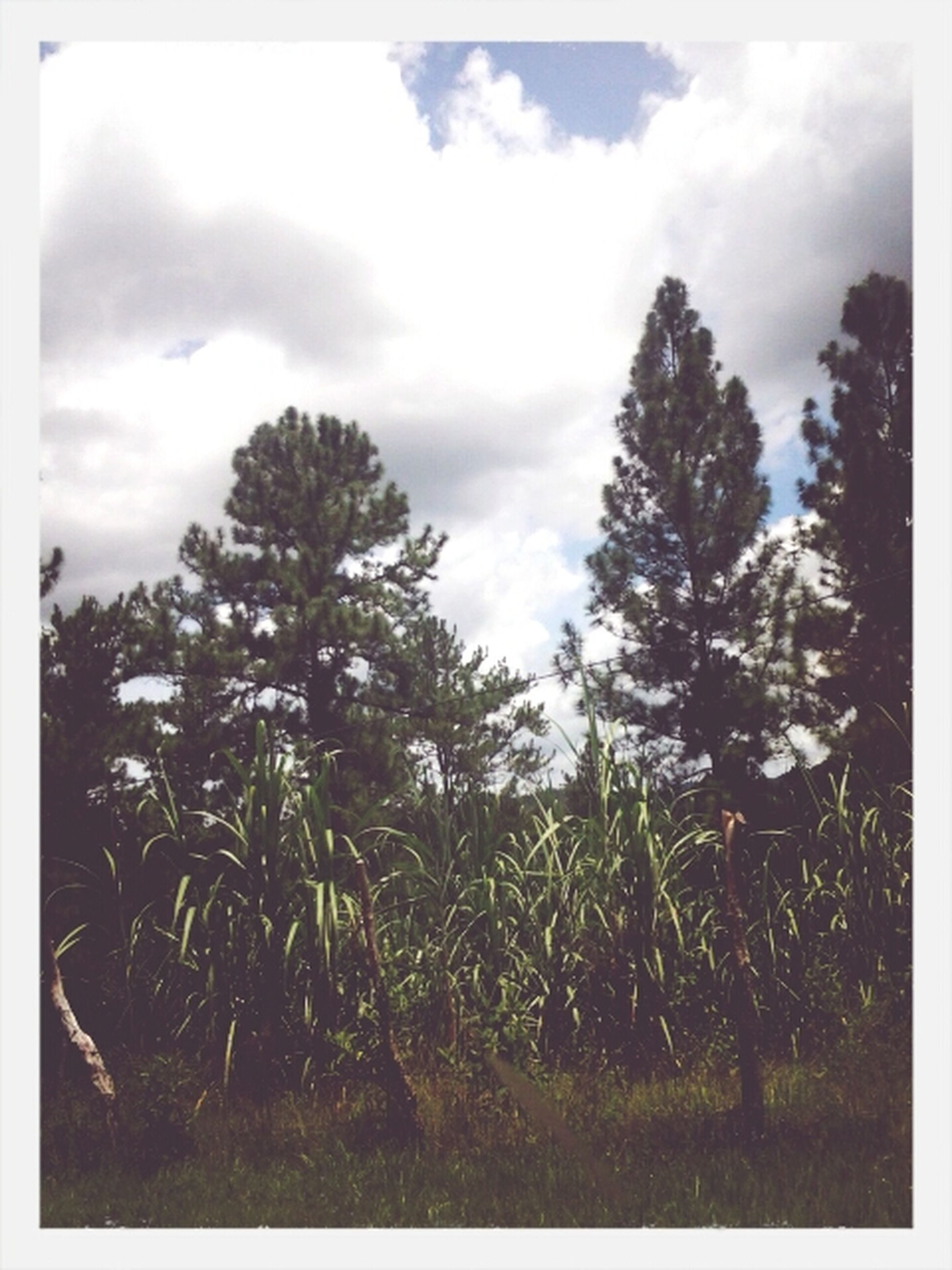 nature, growth, landscape, sky, plant, vegetation, field, grass, tranquility, no people, outdoors, tree, day, beauty in nature