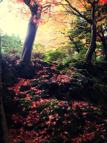Japan Autumn Nature Trees IPhone Colorful