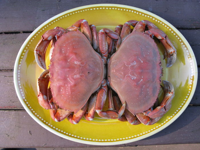 High angle view of dungeness crab in plate on table