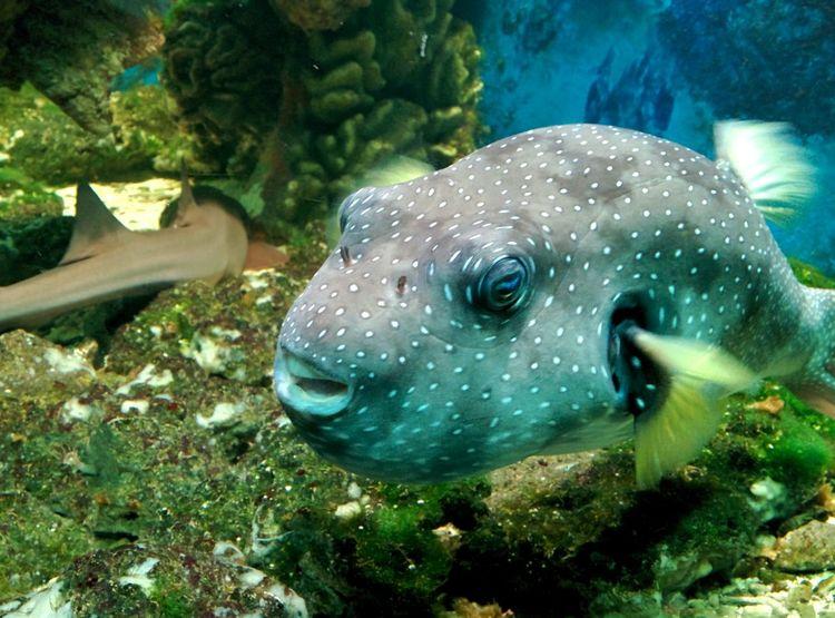 Zoopark ZooLife Sealife Fish Seafish