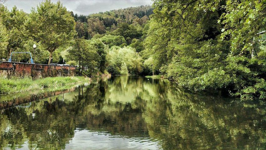 Errekatxo El Regato, Barakaldo Barakaldo Euskalherria Tree Plant Water Growth Beauty In Nature Forest Tranquility