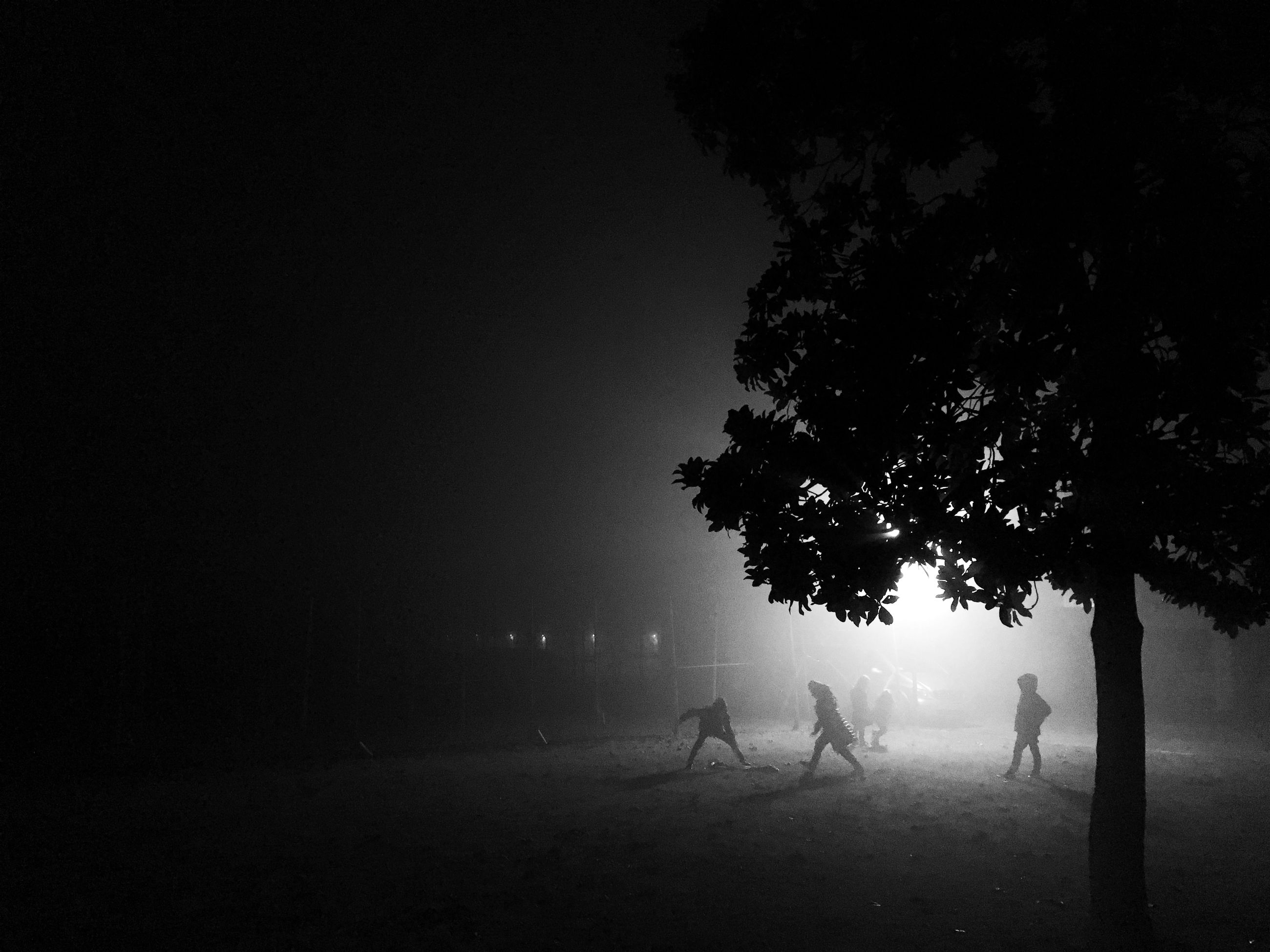 tree, silhouette, fog, tranquility, night, tranquil scene, weather, nature, the way forward, copy space, foggy, beauty in nature, road, landscape, scenics, field, dusk, dark, outdoors