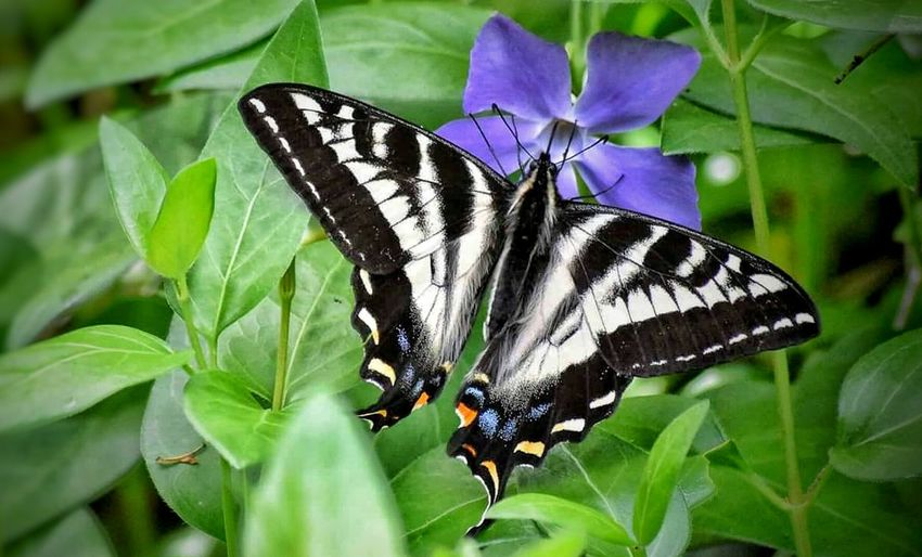 Insect Butterfly - Insect Animals In The Wild Animal Themes One Animal Animal Wing Leaf Nature Animal Wildlife Butterfly No People Close-up Animal Markings Outdoors Plant Spread Wings Day Full Length Beauty In Nature Pollination