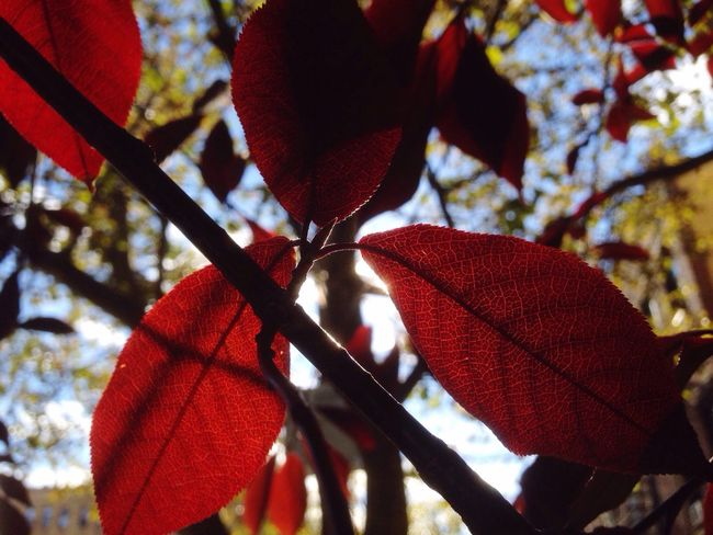 Autumn leaves Leaf Autumn Nature New York City Photography Beauty In Nature Outdoors